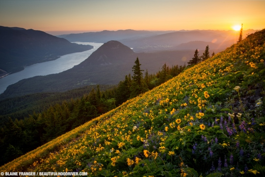 dog-mountain-sunset-wildflowers_k9a1222
